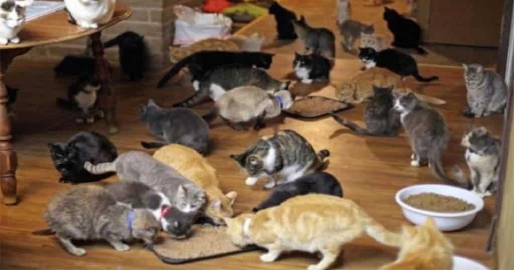 La nueva moda: sobar gatos y tomar café